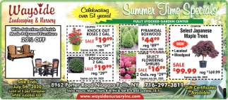 Summer Time Specials