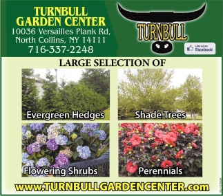 Large Selection Of Evergreen Hedges, Shade Trees, Flowering Shrubs