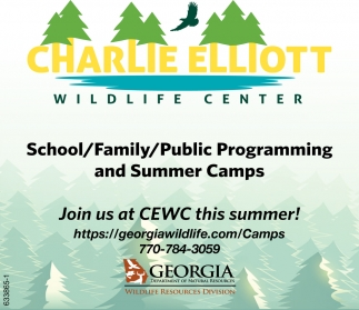 Public Programming and Summer Camps