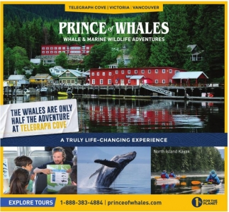 Whale & Marine Wildlife Adventures
