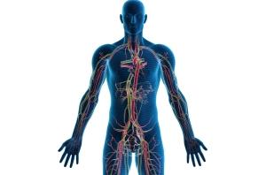 Human body2
