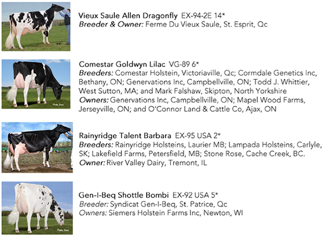 Holstein Canada Cow of the Year Nominees