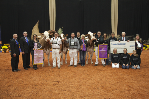 Grand Champions at International Red and White Show 2012