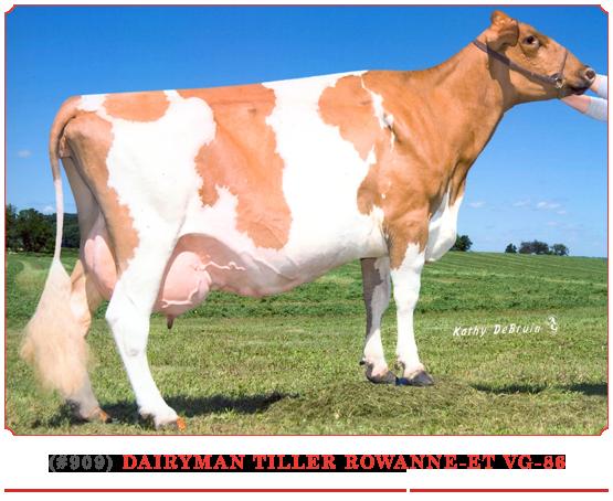 Dairyman Tiller Rowanne