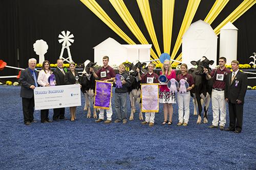 2015 Junior Holstein show