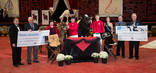 Supreme Champion of Junior Show at 2014 World Dairy Expo