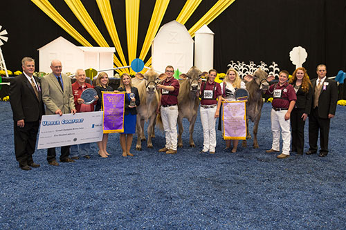 Brown Swiss Champions of Junior Show