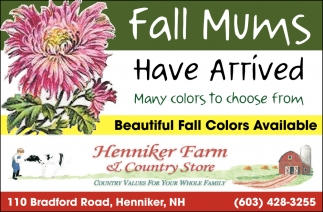Fall Mums Have Arrived