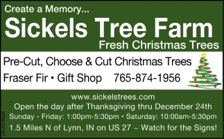 Pre Cut Choose Cut Christmas Trees Sickels Tree Farm