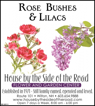 Rose Bushes & Lilacs