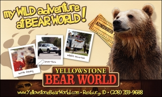 My Wild Adventure At Bear World!