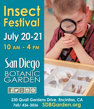 Insect Festival