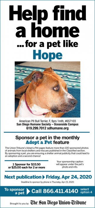 Help Find a Home... for a Pet Like Hope