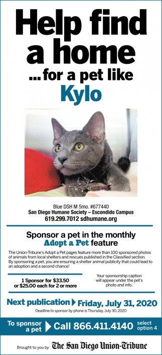 Help Find a Home... for a Pet Like Kylo