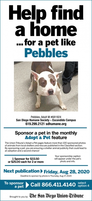 Help Find a Home... for a Pet Like Pebbles