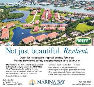 Tampa Bay, Florida news   Tampa Bay Times/St  Pete Times