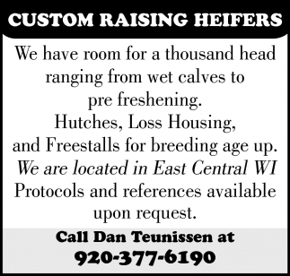 Custom Raising Heifers