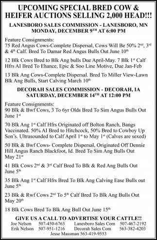Upcoming Special Bred Cow & Haifer Auctions Selling