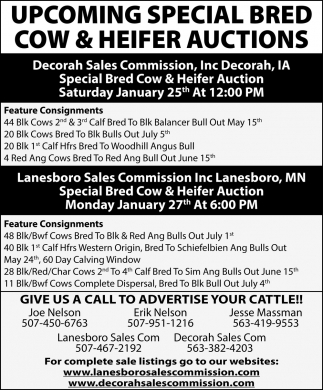 Special Bred Cow & Heifer Auctions