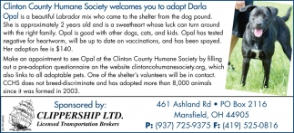 Wilmington Area Humane Society welcomes you to adopt Darla
