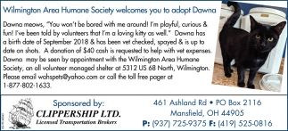 Wilmington Area Humane Society welcomes you to adopt Dawna,