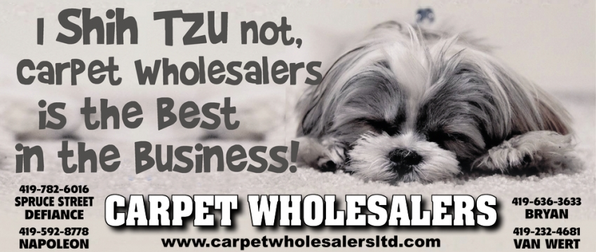 I Shih Tzu Not, Carpet Wholesalers is the Best in the Business