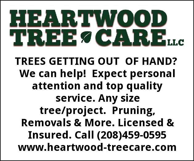 Trees Getting Out of Hand? We Can Help