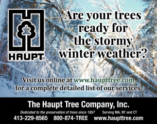 Are Your Trees Ready For The Stormy Winter Weather?