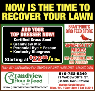Now is the Time to Recover Your Lawn
