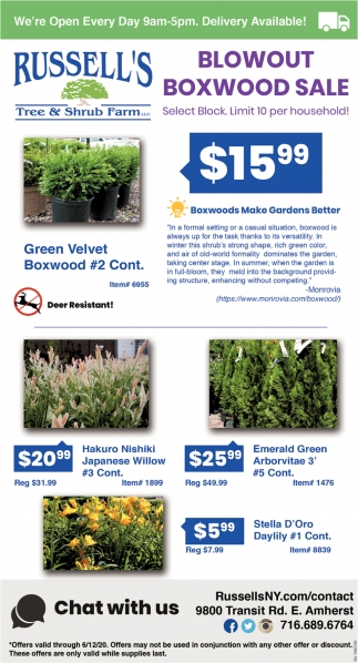 Blowout Boxwood Sale