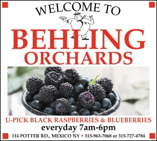 U-Pick Black Raspberries & Blueberries