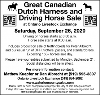 Great Canadian Dutch Harness And Driving Horse Sale